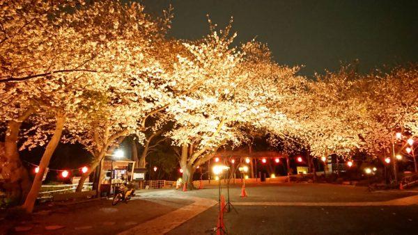 妙深寺の夜桜